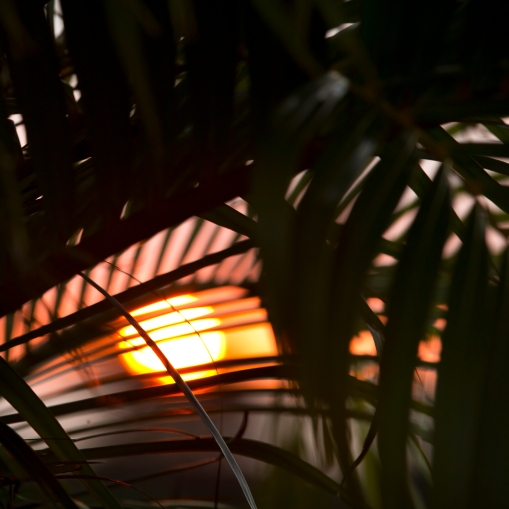 Sunset_Ball_07.2014_005